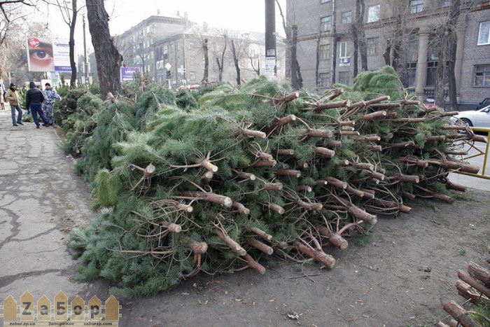 Первый елочный базар в Запорожье